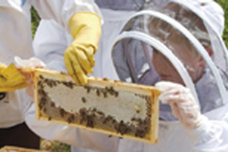 Image for Bungay Community Bees