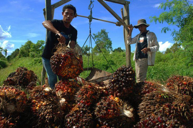 Image for Huge palm oil company promises to end deforestation