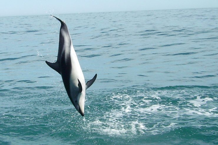 Image for Give dolphins more rights say experts