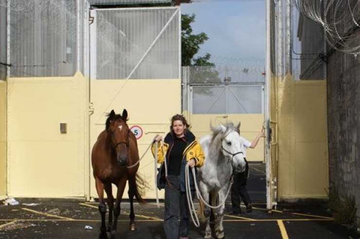 Image for Horses help prisoners to heal