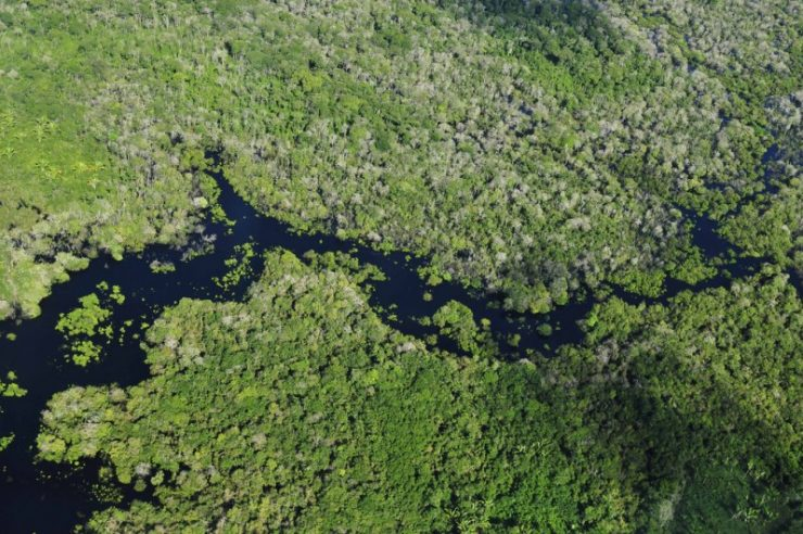 Image for Amazon deforestation rate at record low
