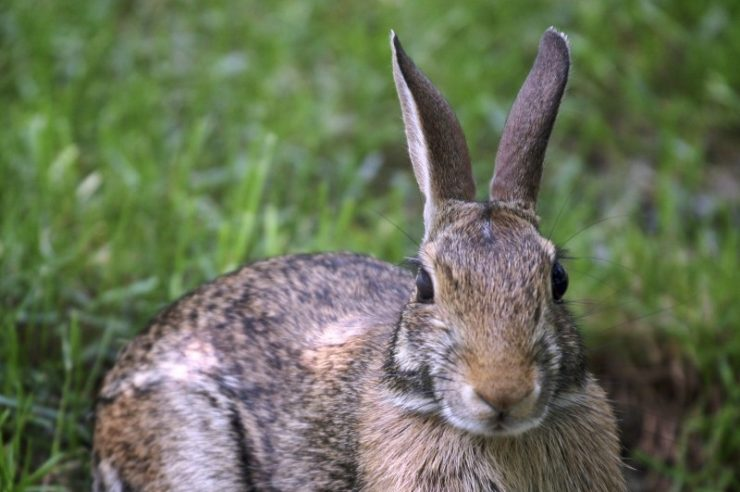 Image for EU bans import and sale of cosmetics tested on animals