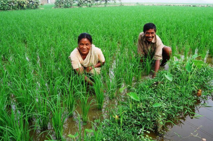 Image for 'Blue-green' revolution could boost food security in Bangladesh