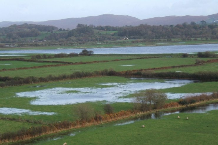 Image for New grass variety could cut flooding risk by half