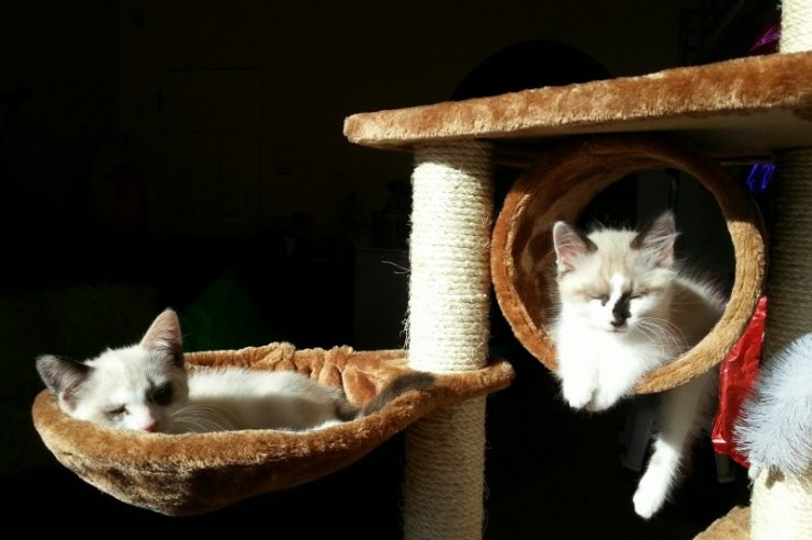 Image for Plans afoot for Brighton's first cat cafe