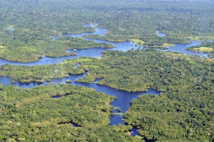 Image for £125m raised for world's largest protected area of rainforest