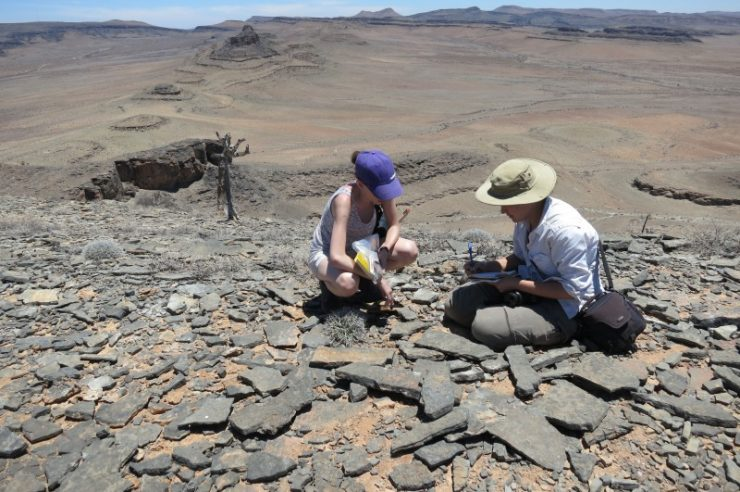 Image for Oldest animal-built reef discovered in Namibia