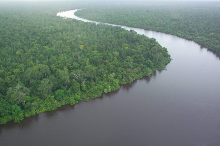 Image for World's largest paper mill destroys plantations to protect peatlands
