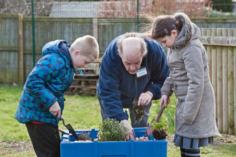 OLD MOAT SCHOOL, CHORLTON, Manchester RONALD AVISON an Intergen volunteer helping in the school garden