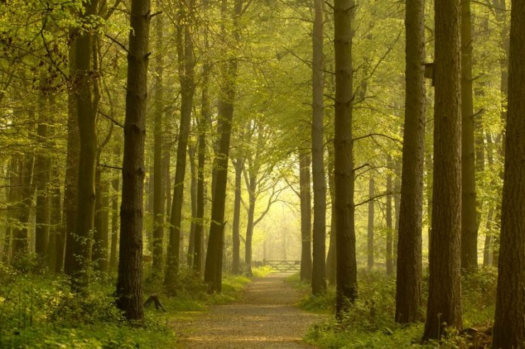Image for Into the woods on the National Forest Way