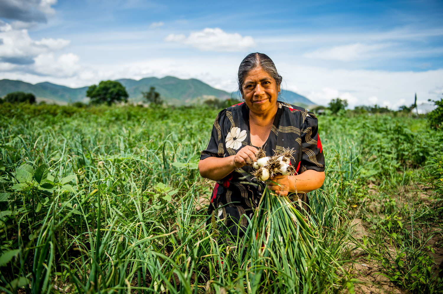 Mexican farmers are among the groups poised to benefit most from ethical finance. Image: Opmeer Reports/Oikocredit