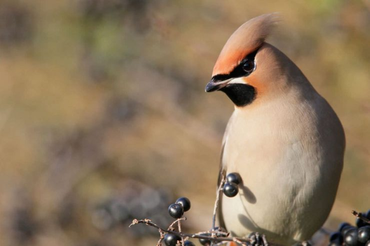 Image for Wildlife-friendly gardening causes 'boom' in bird sightings in UK