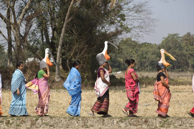 Image for The all-women 'army' protecting Assam's rare storks