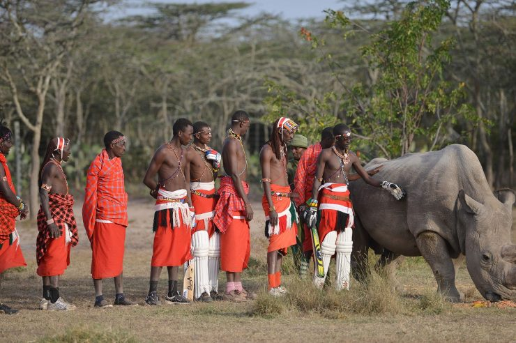 Image for Maasai men stand up for the last male rhino of its kind
