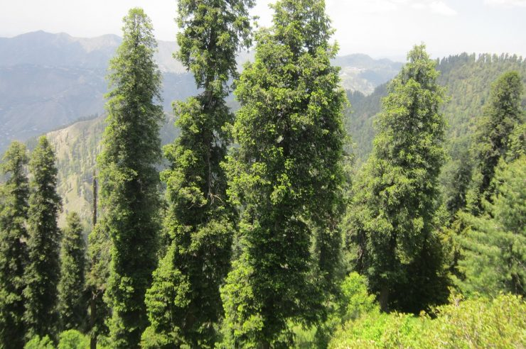 Image for 1bn trees planted in Pakistan in a bid to slow the effects of climate change
