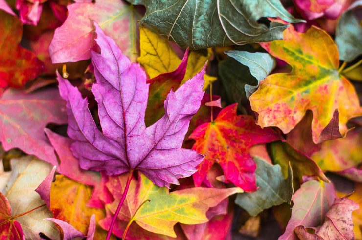 Image for 4 ways to help nature in your garden this autumn