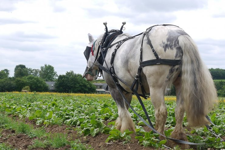 Image for Life in the slow lane: horse-drawn farming