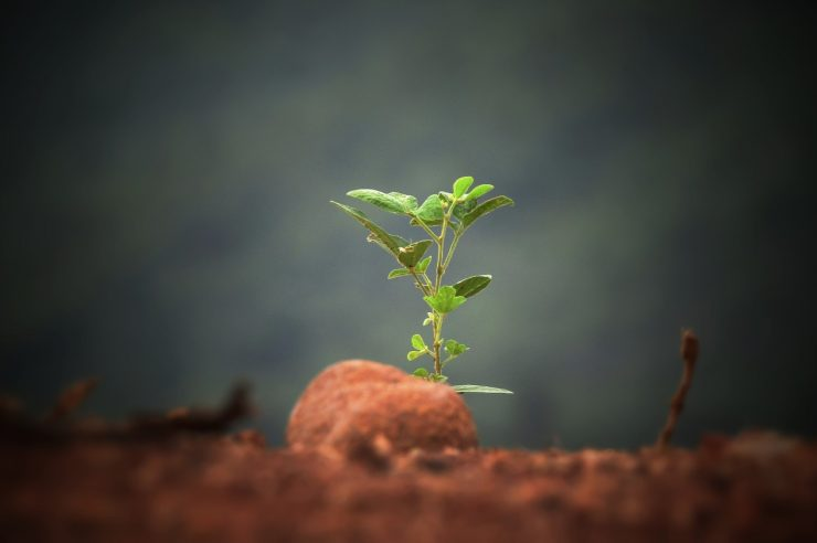 Image for 5 possible solutions to soil degradation
