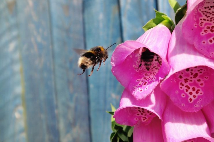 Image for Five ways to make your garden or green space more bee-friendly