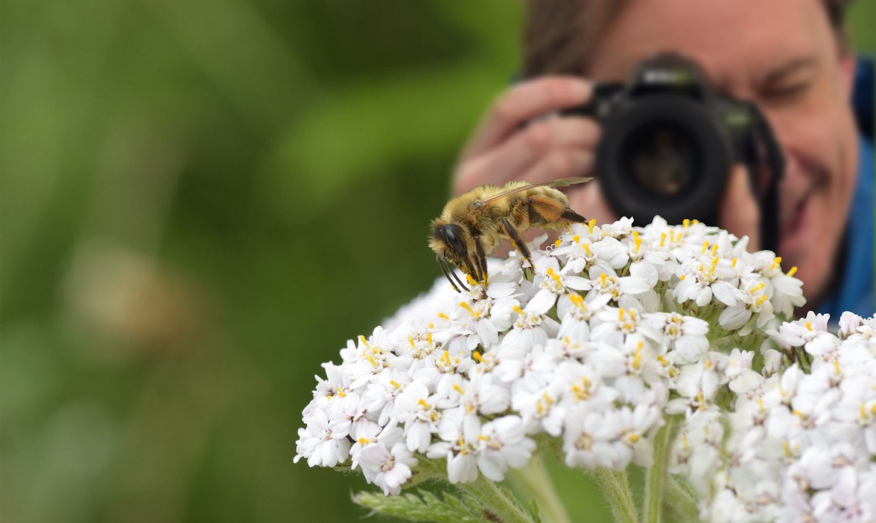 Image for Why I love bees: five enthusiasts spill the buzz