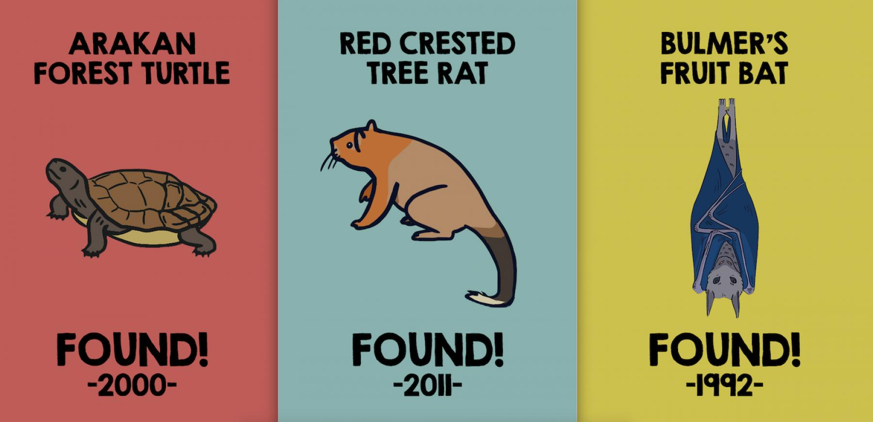 Image for Lost and found: telling the stories of rediscovered species