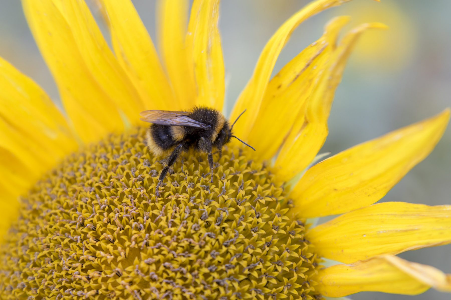 Image for World Bee Day: five projects making a difference to bees this year