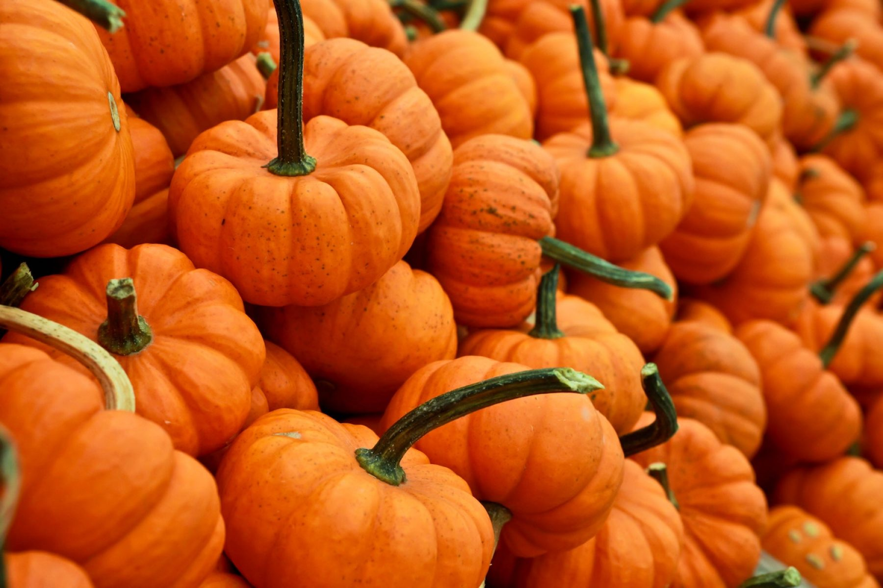 Image for 'Cherish, don't chuck your Halloween pumpkins' urges charity