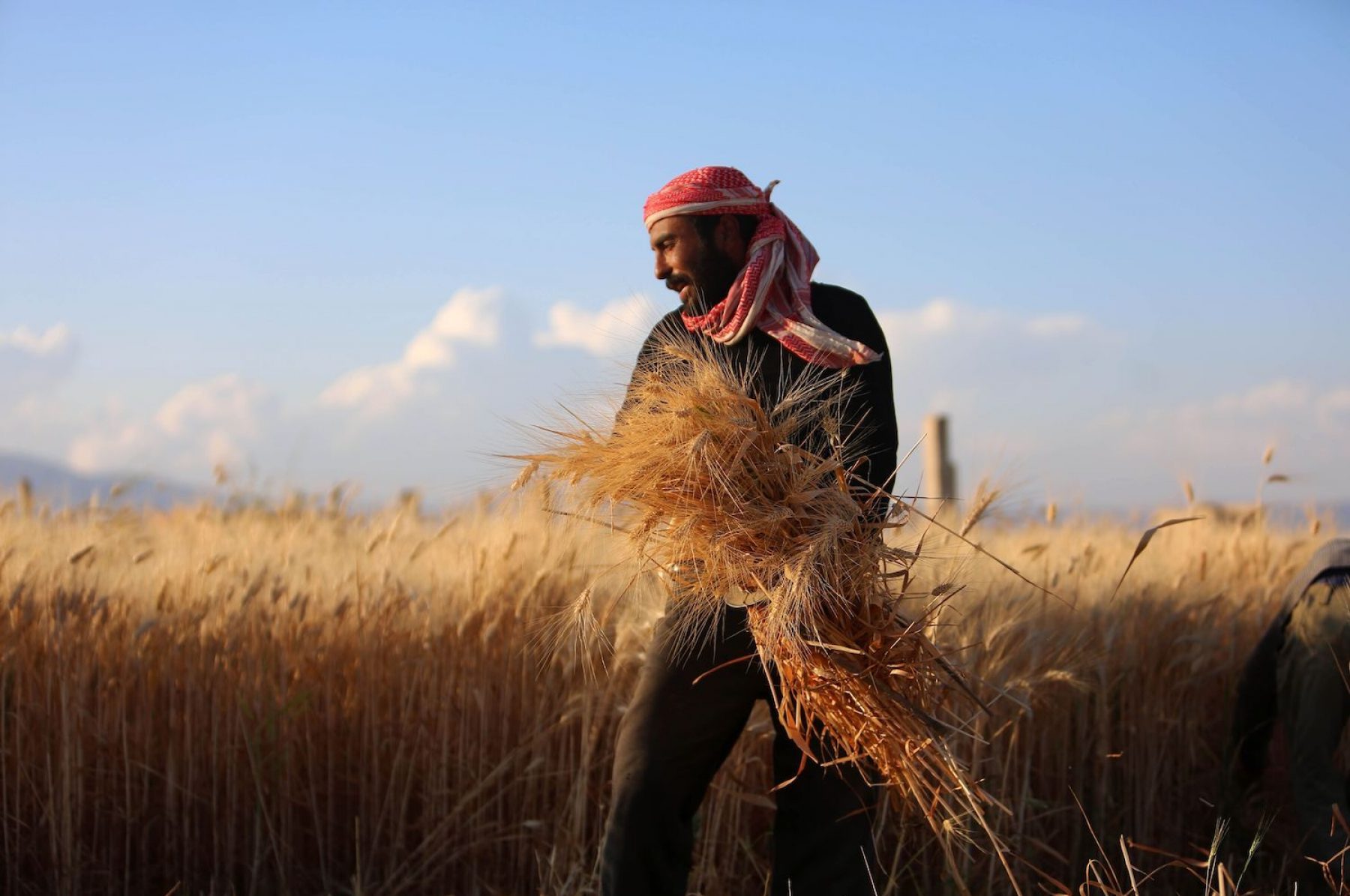 Image for Seed savers: how the US is looking to Syria for ancient wisdom in nature