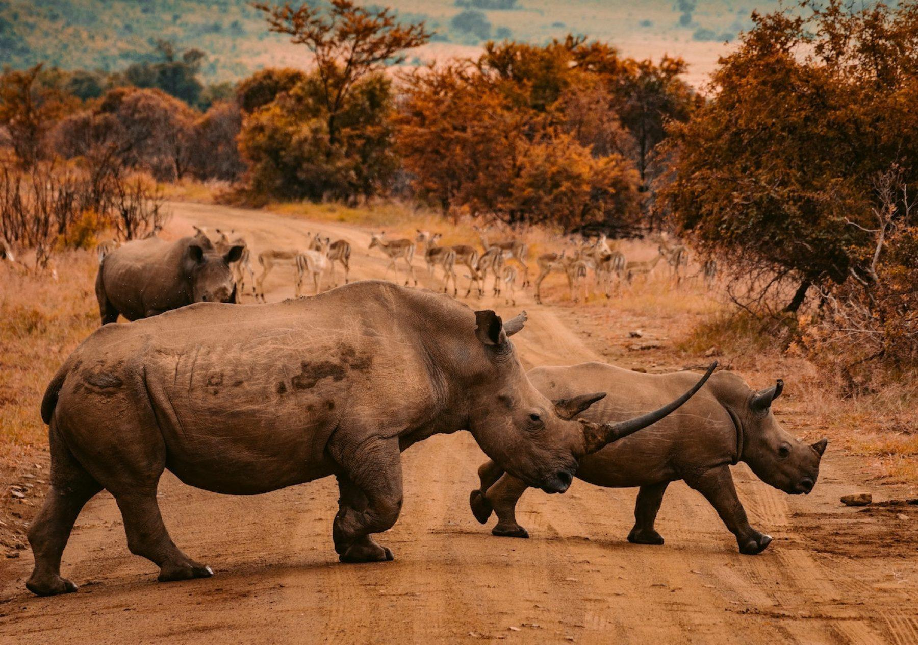 Image for Rhino deaths decline in South Africa after anti-poaching efforts