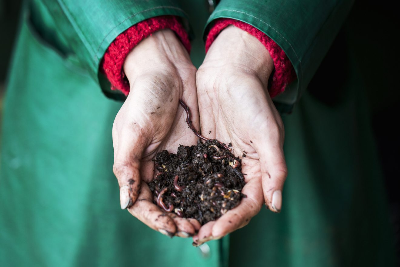 Image for One woman's response to soil insecurity? Worm husbandry