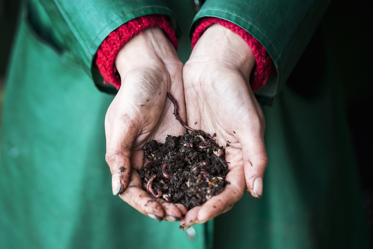 One woman's response to soil insecurity? Worm husbandry