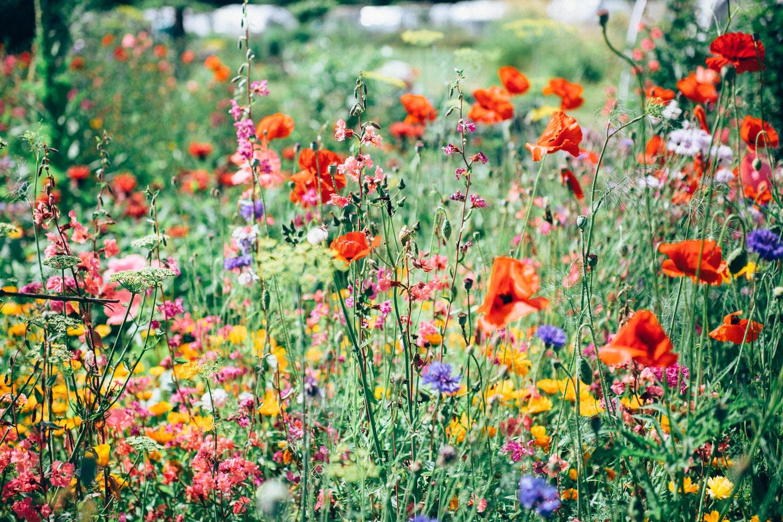 Find a wildflower to love, urges Valentine's Day Twitter campaign
