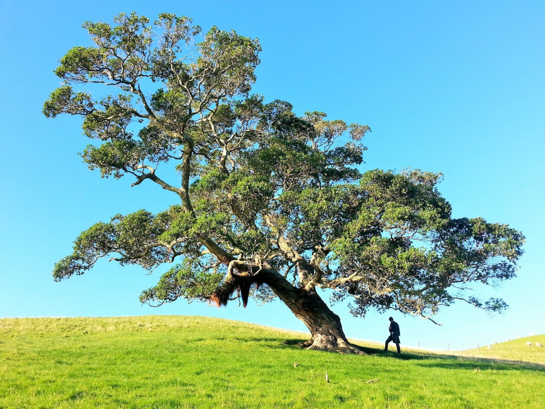 Image for Spare a thought for trees this Valentine's Day, urges writing project