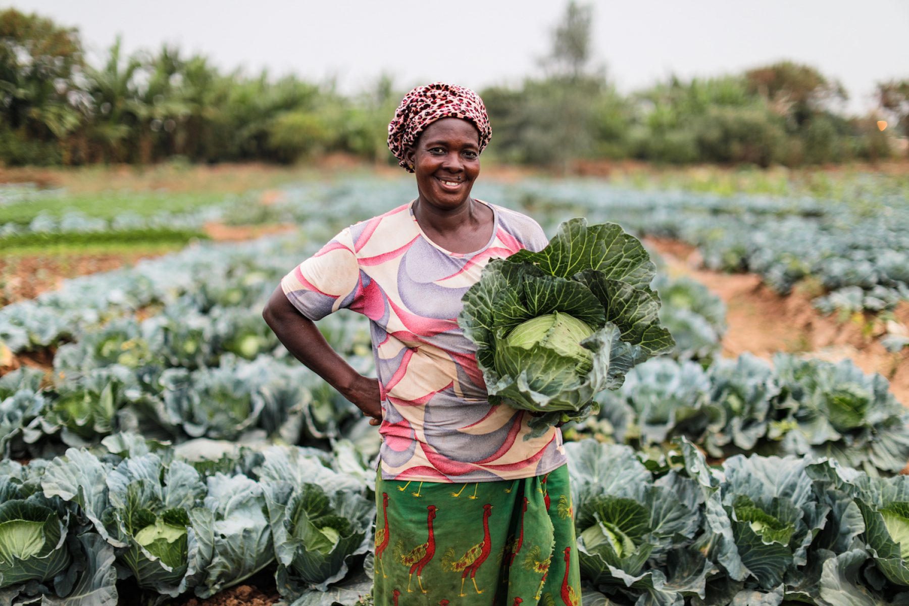 Image for Funding female entrepreneurs: the vegetable farmer from Ivory Coast