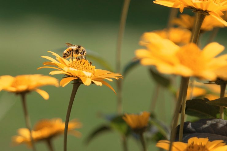 Image for Grassroots bee petition forces greener farming measures in Bavaria