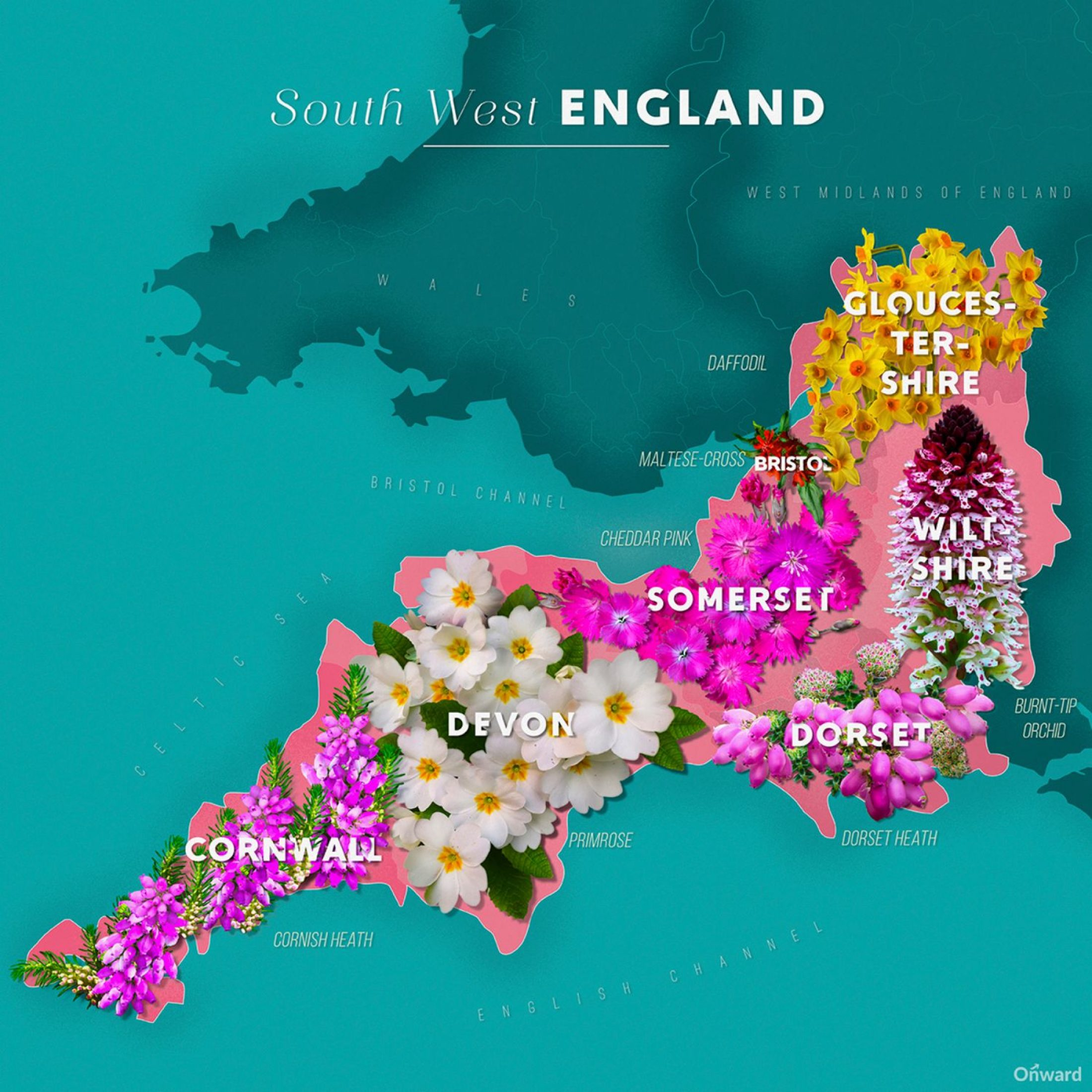 Map Of West Of England.Maps Reveal The People S Choice Wildflowers One For Each Uk