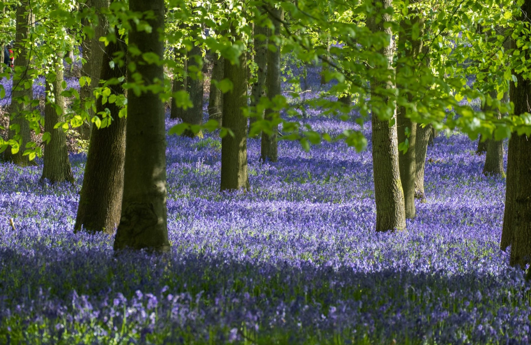 Image for 'Redirect billions of pounds of farm subsidies towards restoring nature,' urge campaigners