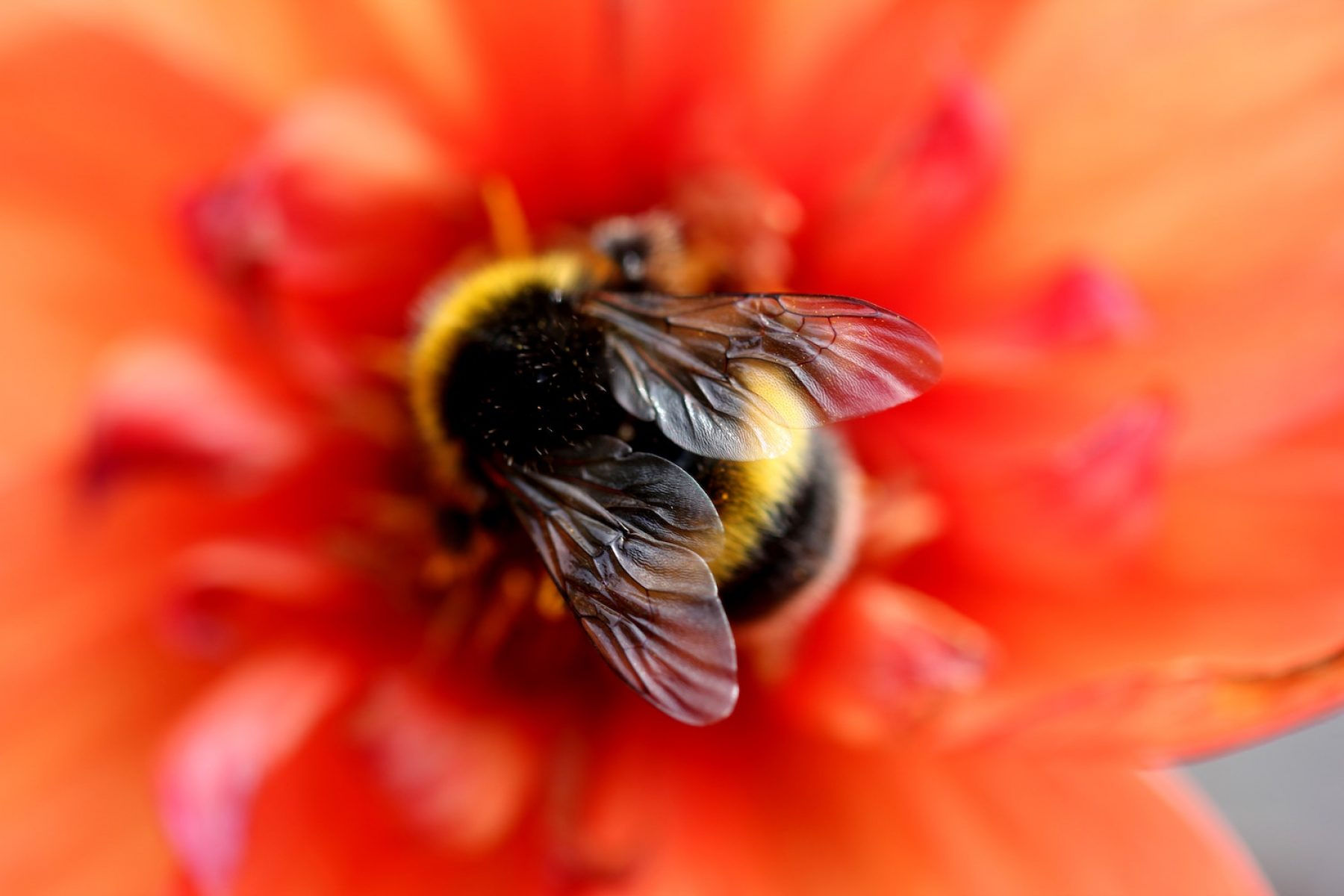 Image for Free online gardening tool launched to help people support pollinators