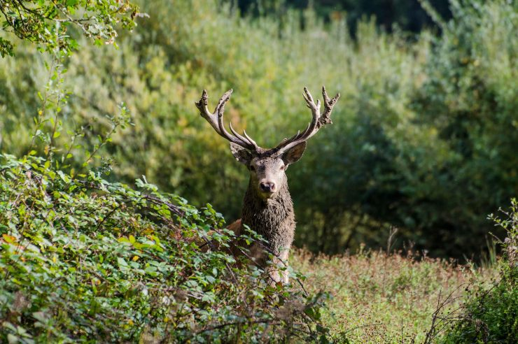 Image for Wild riches: uncovering Knepp estate's ambitious rewilding project