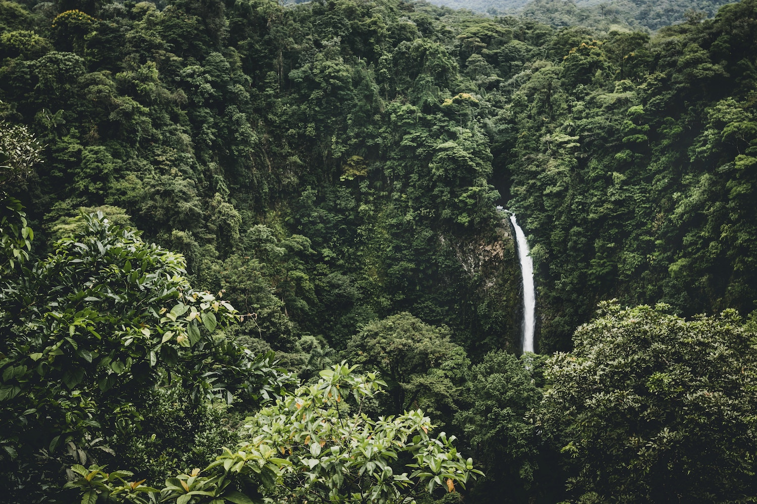 Costa Rica doubles its forest cover in 30 years