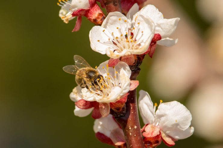 Image for 'Bee saviour' sugar cards give energy boost to weary pollinators