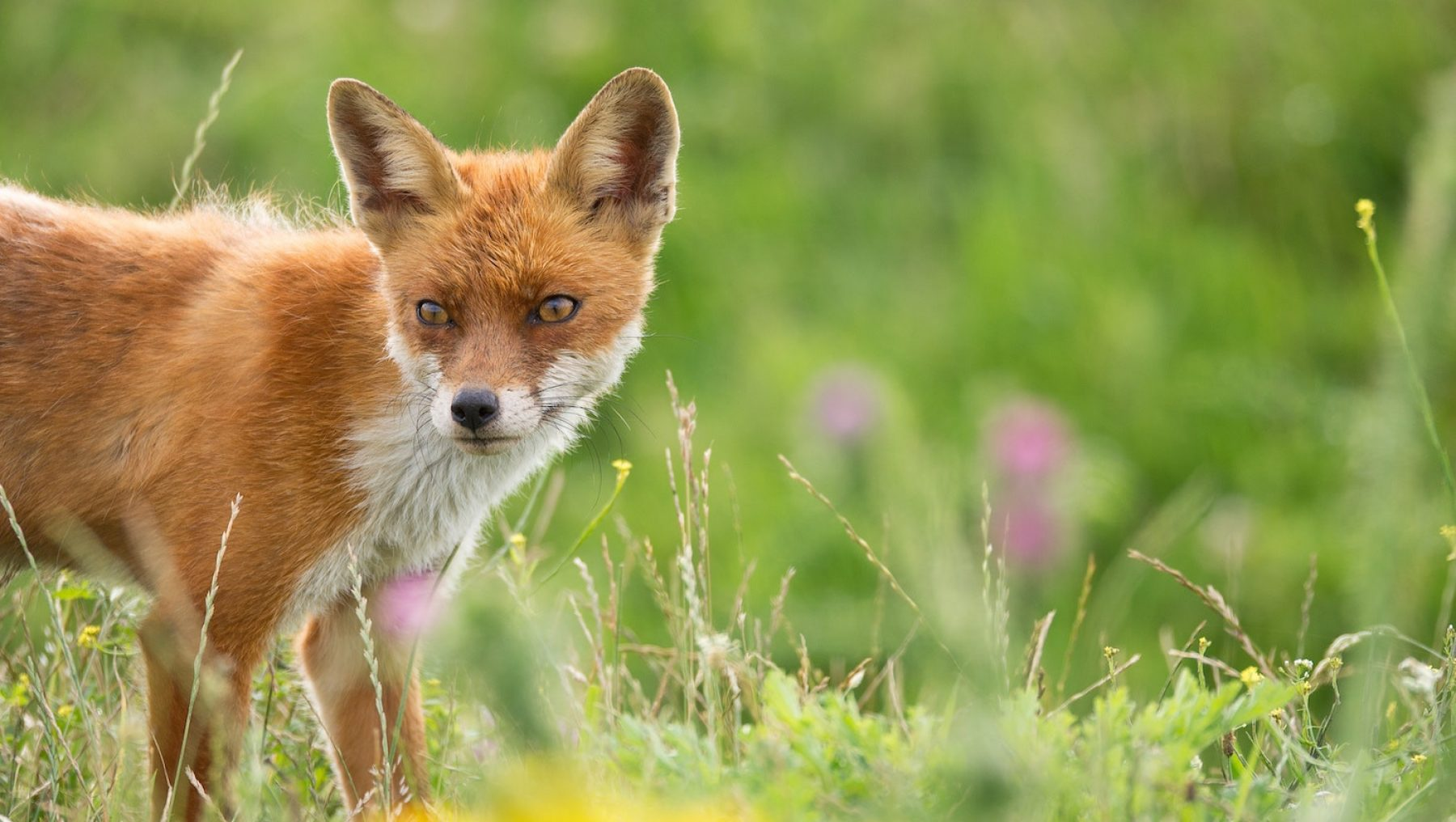 Image for 'Make cities home to nature as well as to us.' Ten ways to support wildlife in urban areas