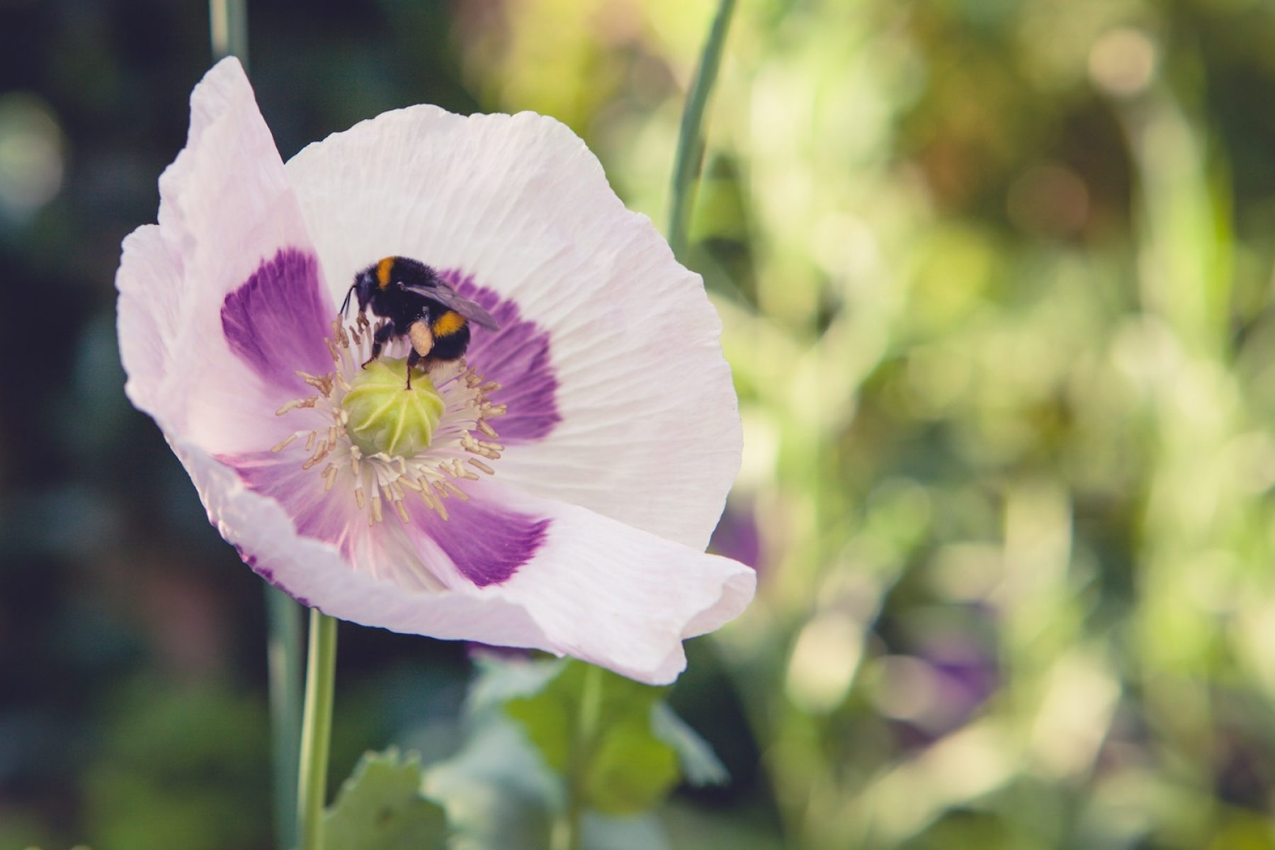 Image for Millions of wildflowers to be planted to help boost UK's bee population
