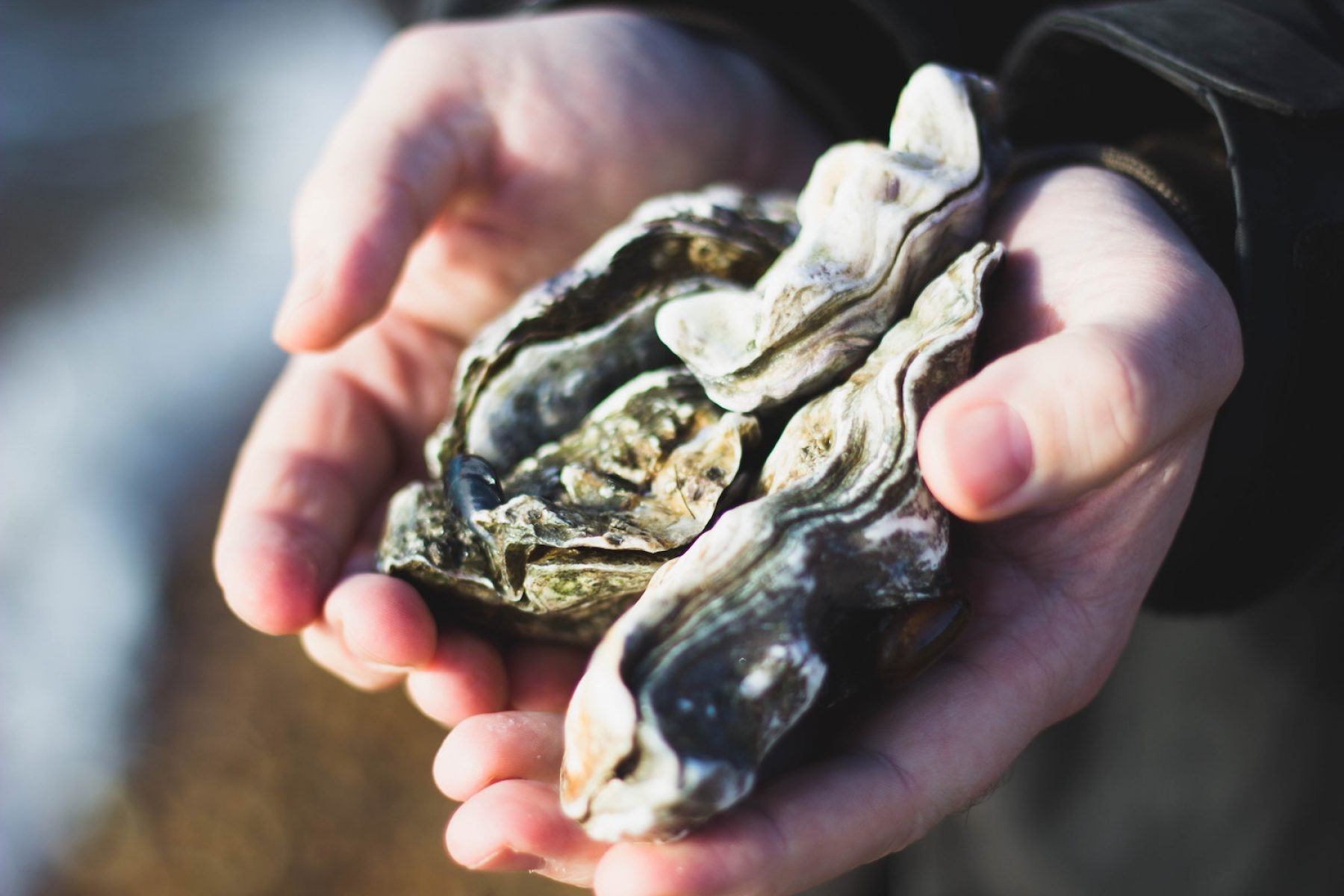 Image for 'Mother oyster' sanctuary in Essex could restore species