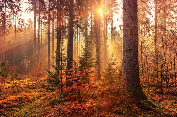 Image for Reforestation schemes gather pace worldwide