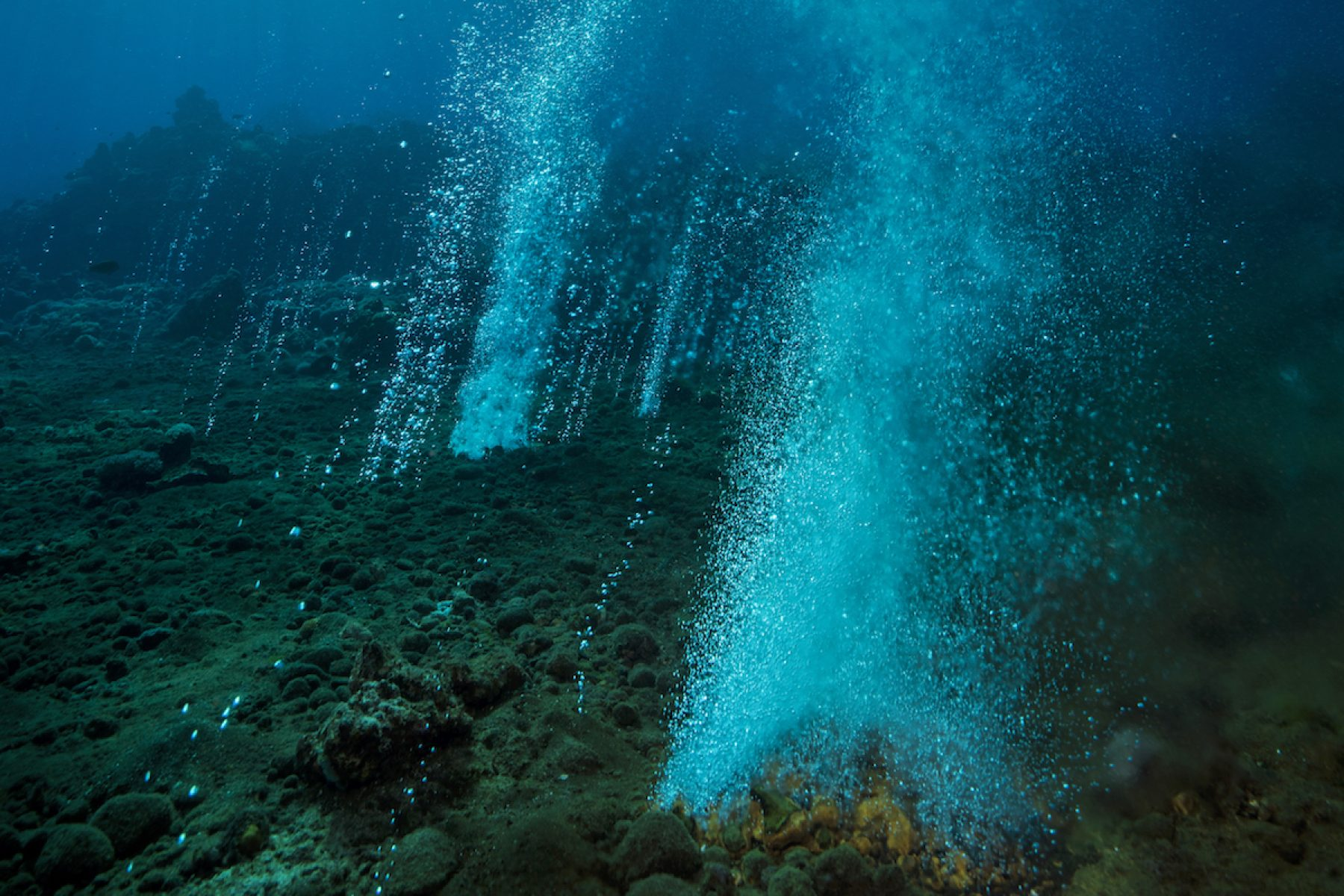 Image for Acid test: researching the impact of climate change on coral reefs