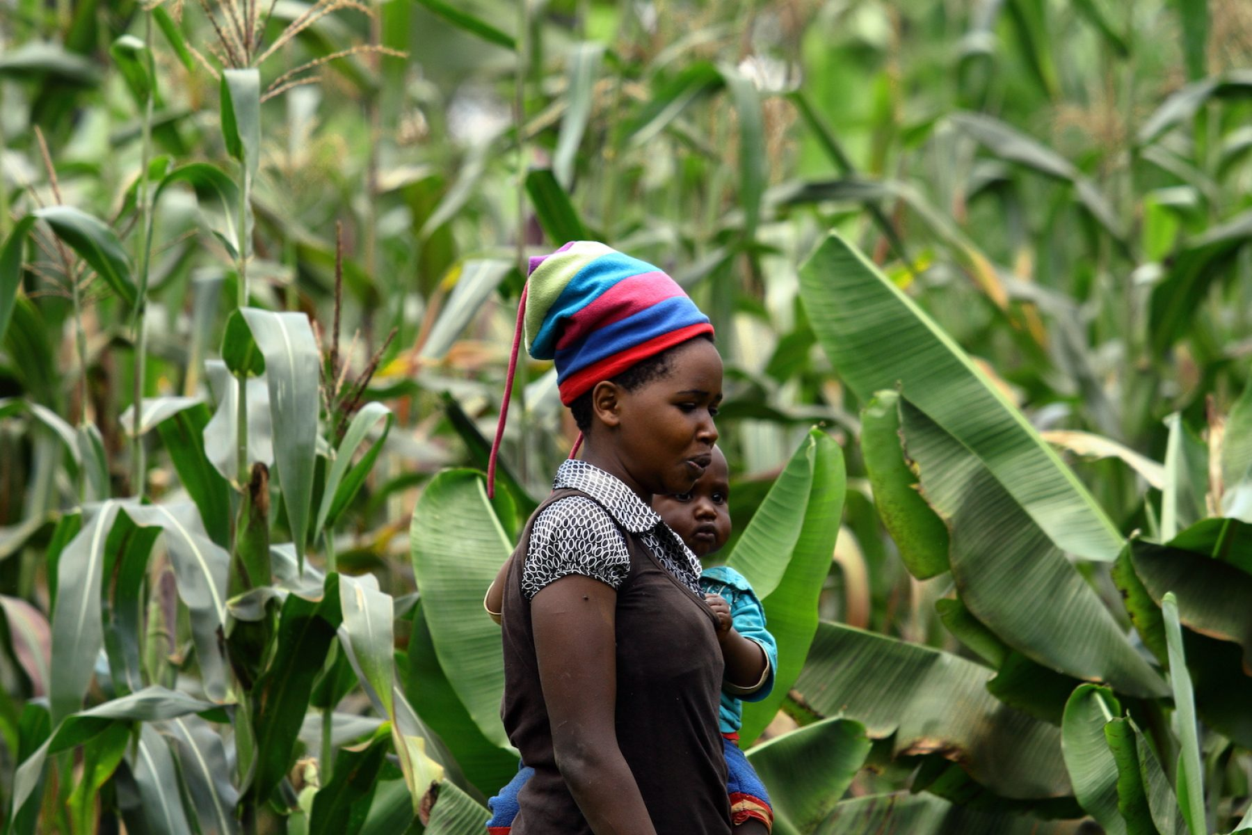 Image for A gift that grows: how dedicating a tree this Mother's Day can support women farmers