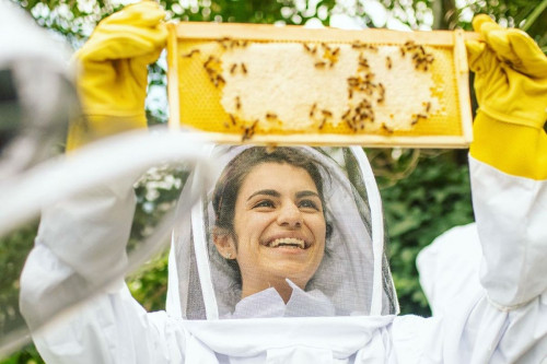 Refugees tend beehives