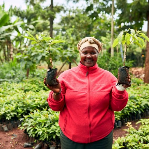 Planting trees for carbon offsetting