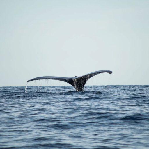 A whale fin at sea